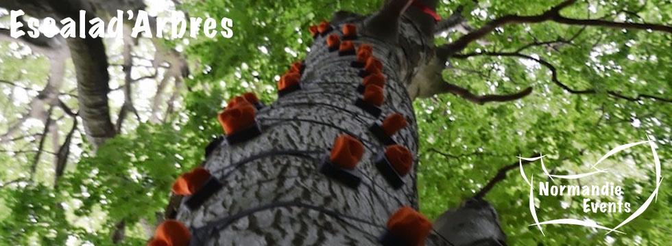 Activité Arborigrimpe - Escalad